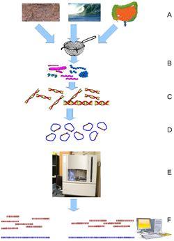 Sampling technique thesis